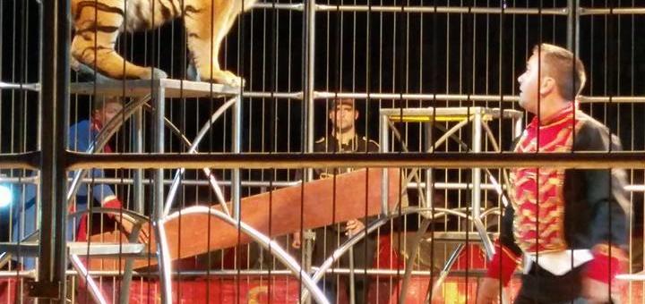 FESTA DE NATAL DA APOGK – QUEIMÓDROMO DO PORTO – 18/12/2016
